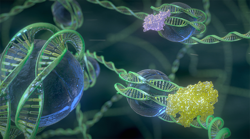 Orchestrating the Genome: The Science of Epigenetics
