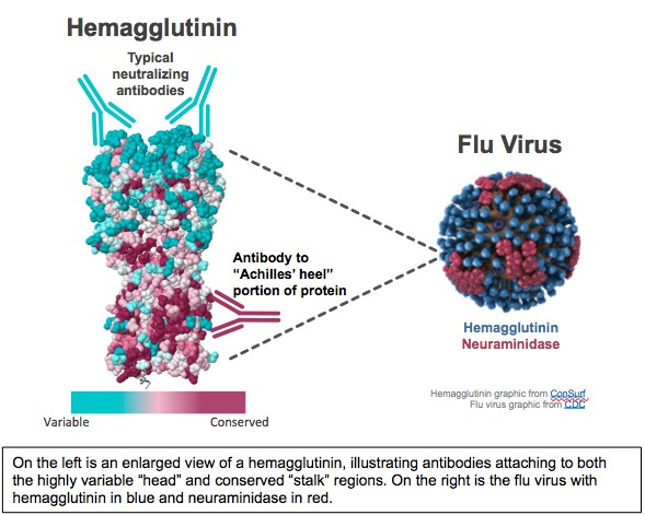Flu Virus Graphic